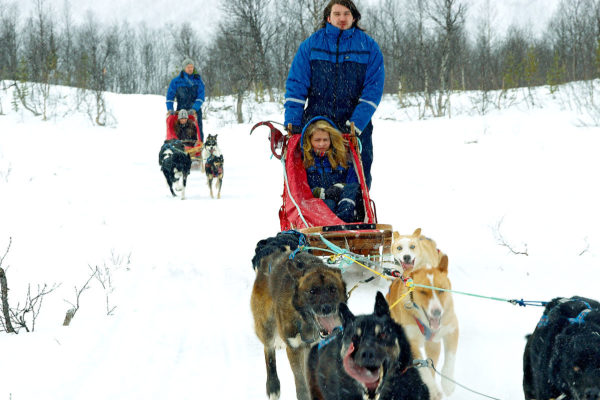 Dog Sledding Day Trip in Bodø, Northern Norway